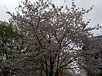 20130324phone_002_2